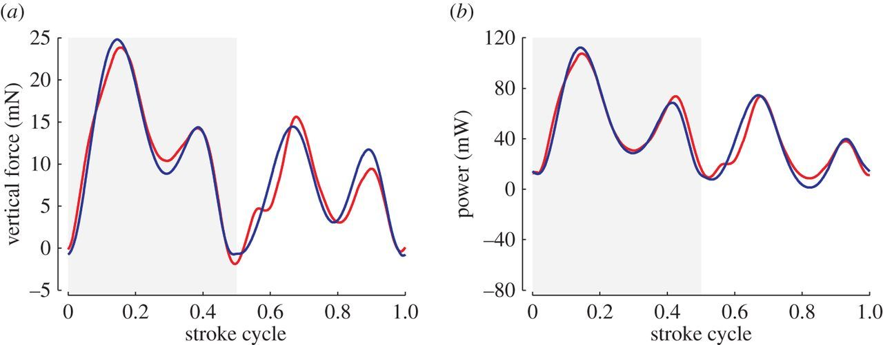 Aerodynamics, sensing and control of insect-scale flapping-wing