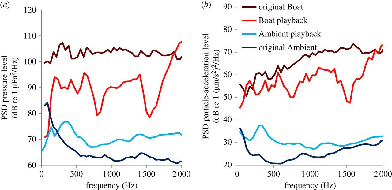 Motorboat noise impacts parental behaviour and offspring survival in