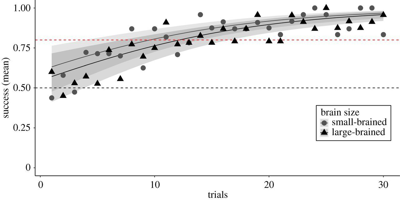 Brain size affects performance in a reversal-learning test