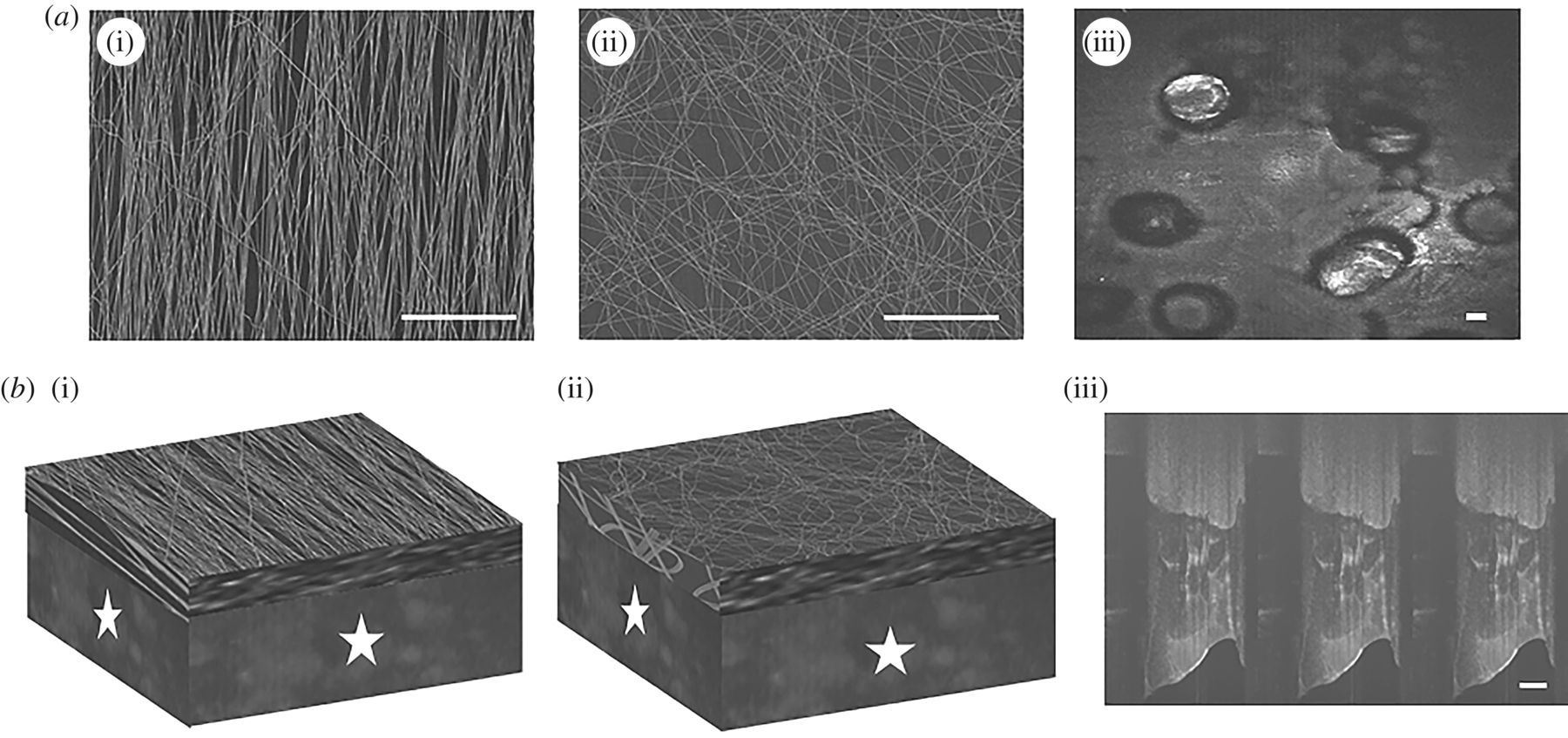 Induction of zonal-specific cellular morphology and matrix synthesis
