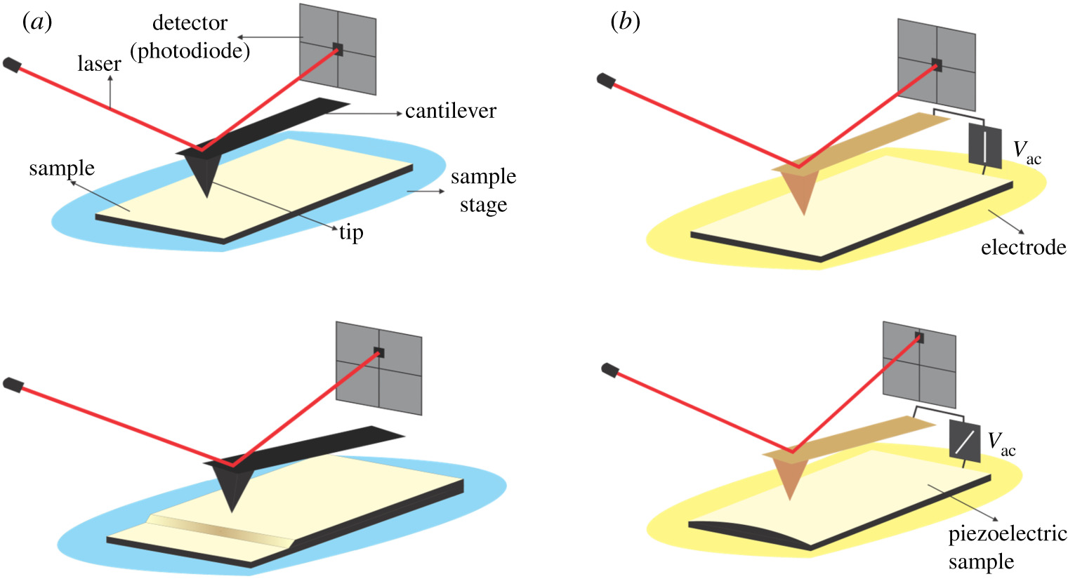 Investigations of ferroelectric polycrystalline bulks and thick
