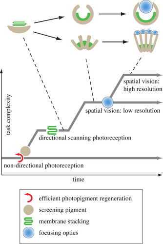 The evolution of eyes and visually guided behaviour