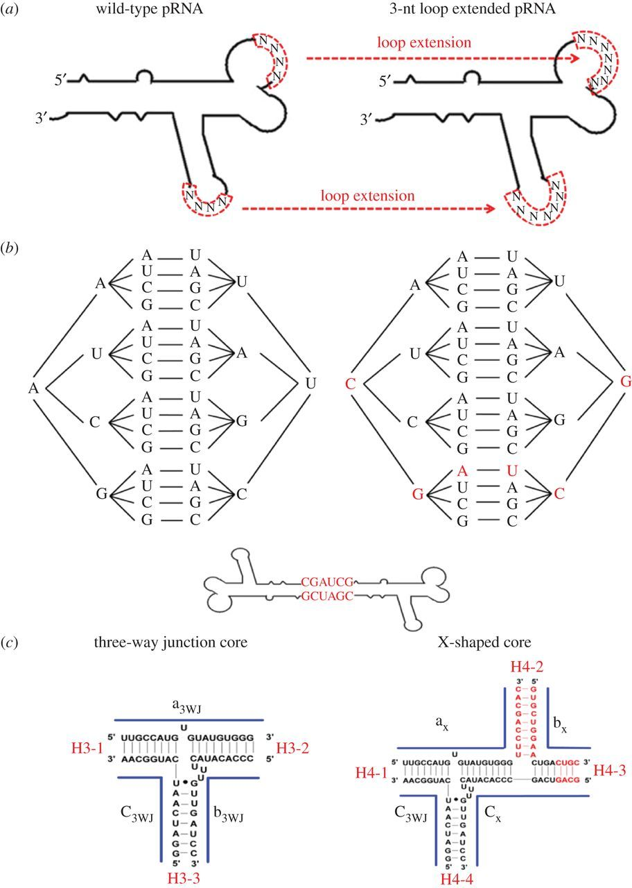 RNA nanotechnology for computer design and in vivo computation