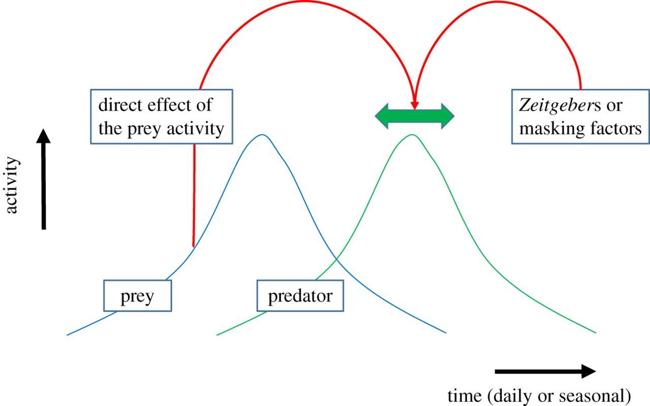 Chronobiology of interspecific interactions in a changing