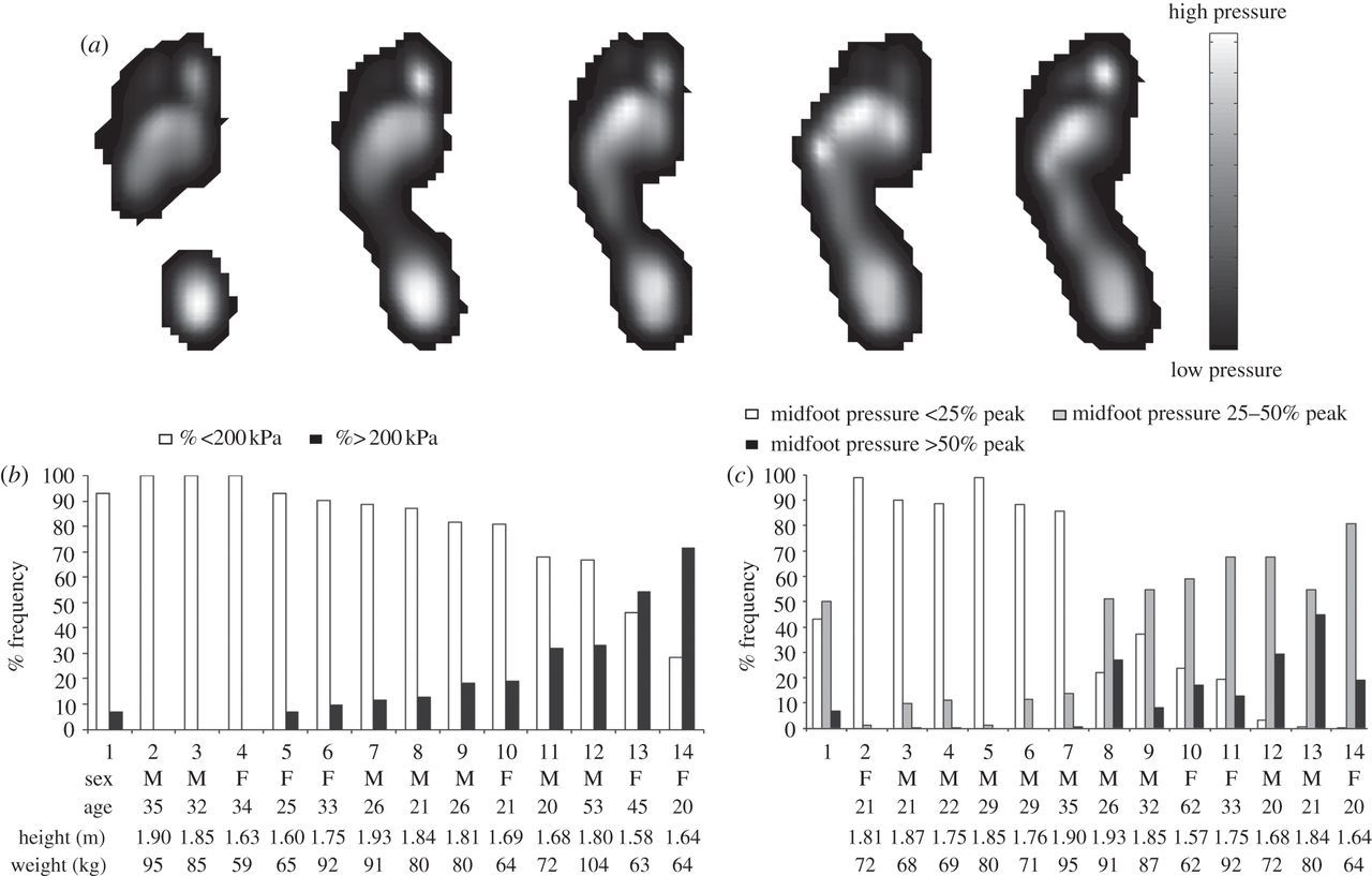 The evolution of compliance in the human lateral mid-foot