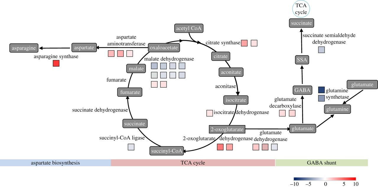 Analysis of the regulation networks in grapevine reveals response to