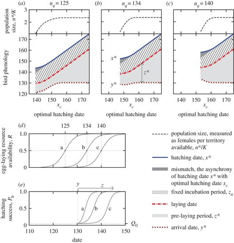 Phenology of two interdependent traits in migratory birds in
