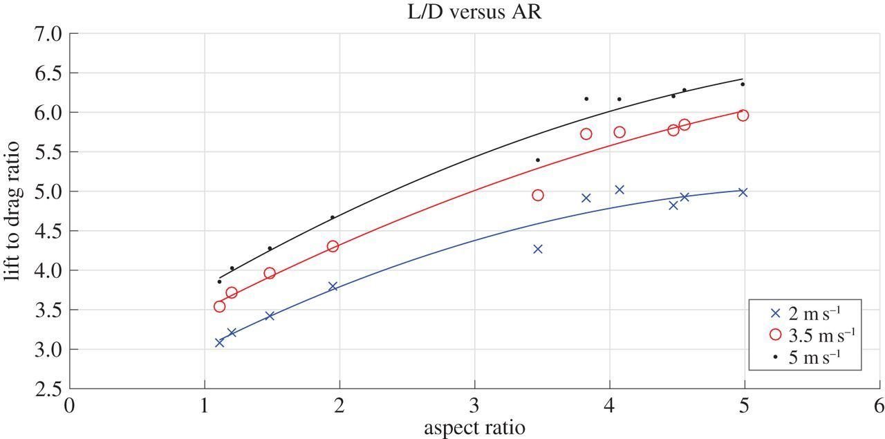 Aerodynamic evaluation of wing shape and wing orientation in