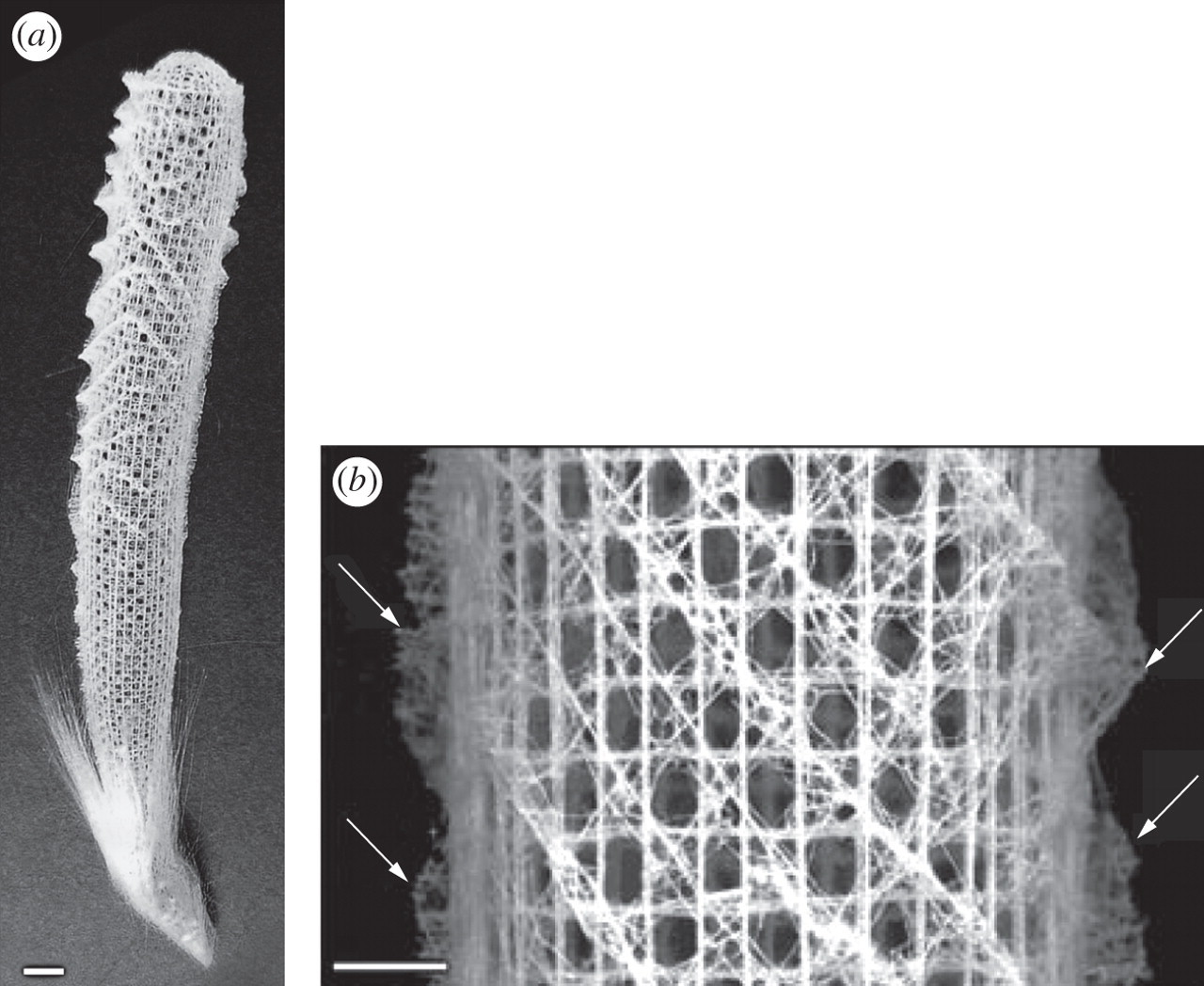 Biomimicry in textiles: past, present and potential  An overview
