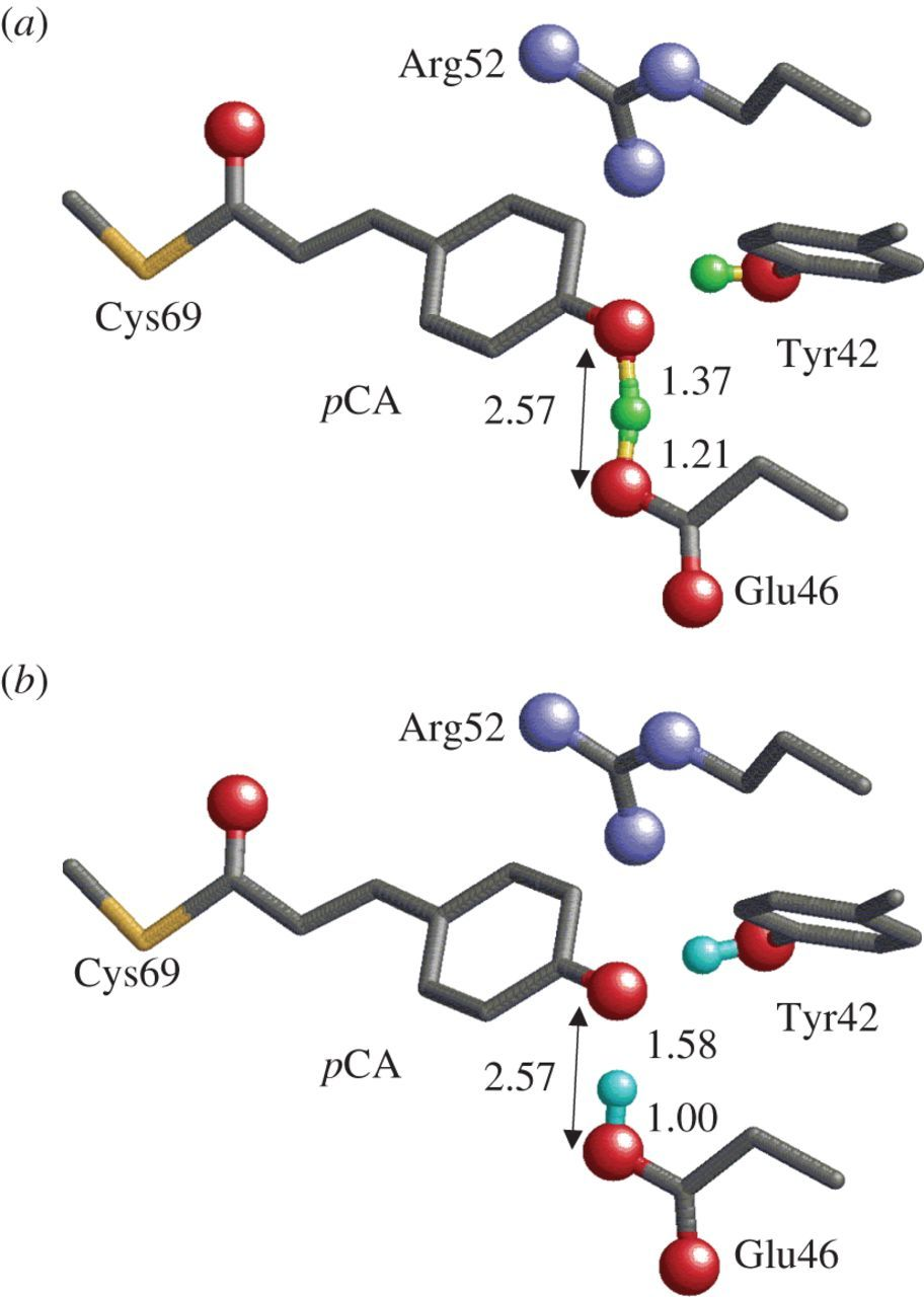 Proton transfer reactions and hydrogen-bond networks in protein