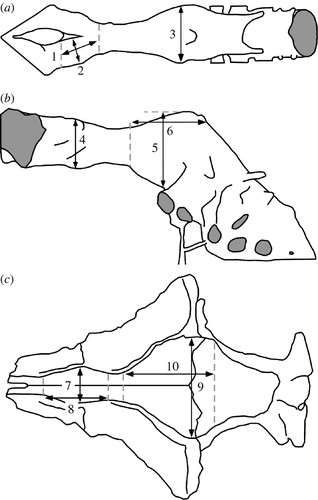 Olfactory Acuity In Theropods Palaeobiological And Evolutionary