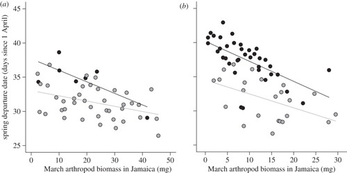 Rainfall-induced changes in food availability modify the