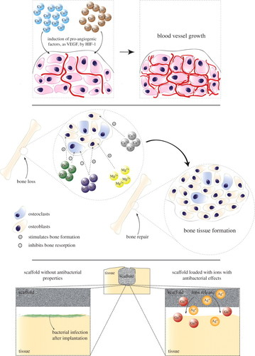 Metallic ions as therapeutic agents in tissue engineering