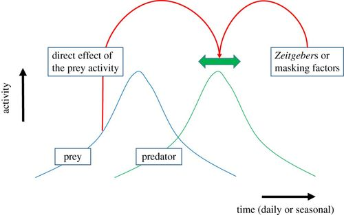 Chronobiology of interspecific interactions in a changing world