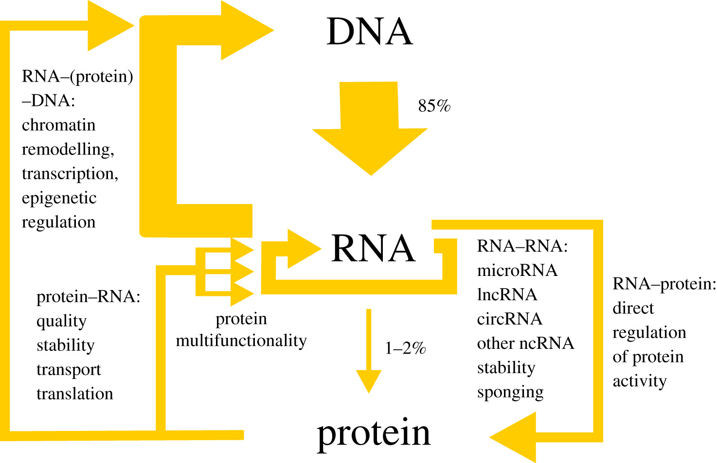 RNA–protein interactions: disorder, moonlighting and junk