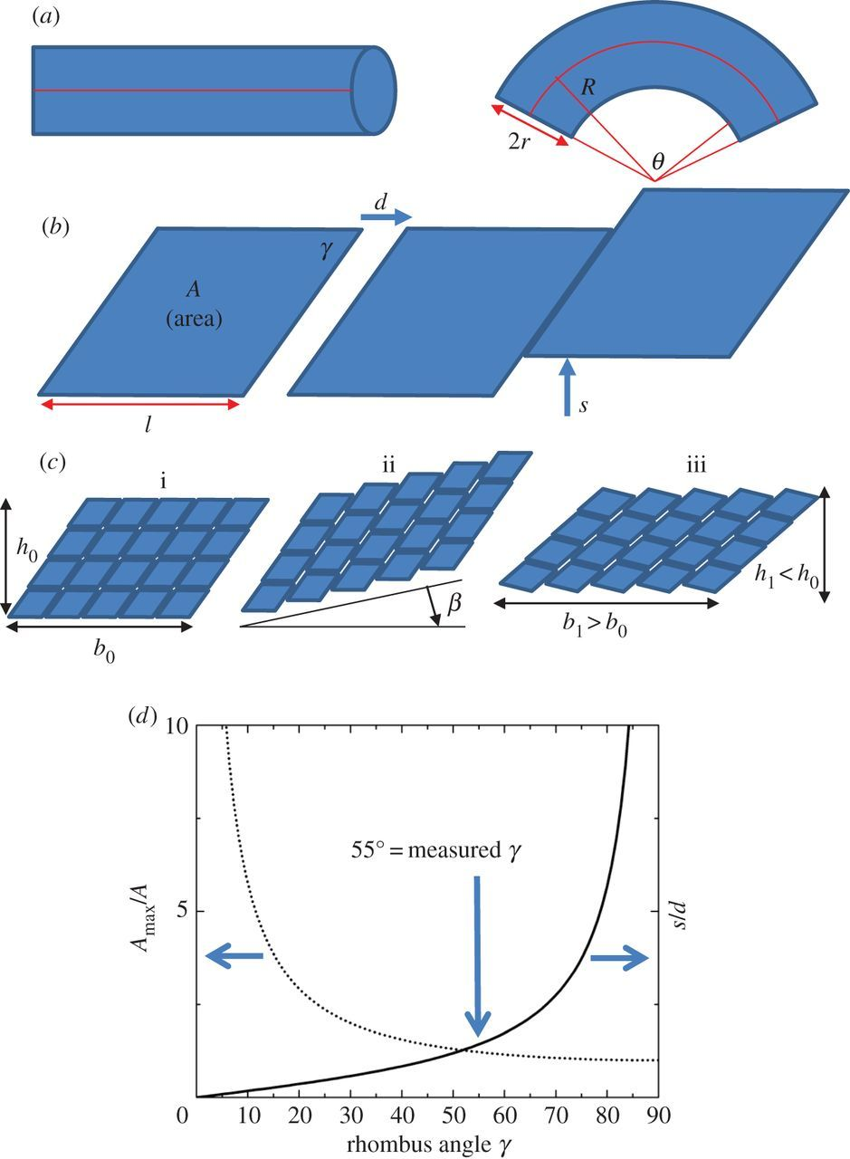 Microstructural and geometric influences in the protective