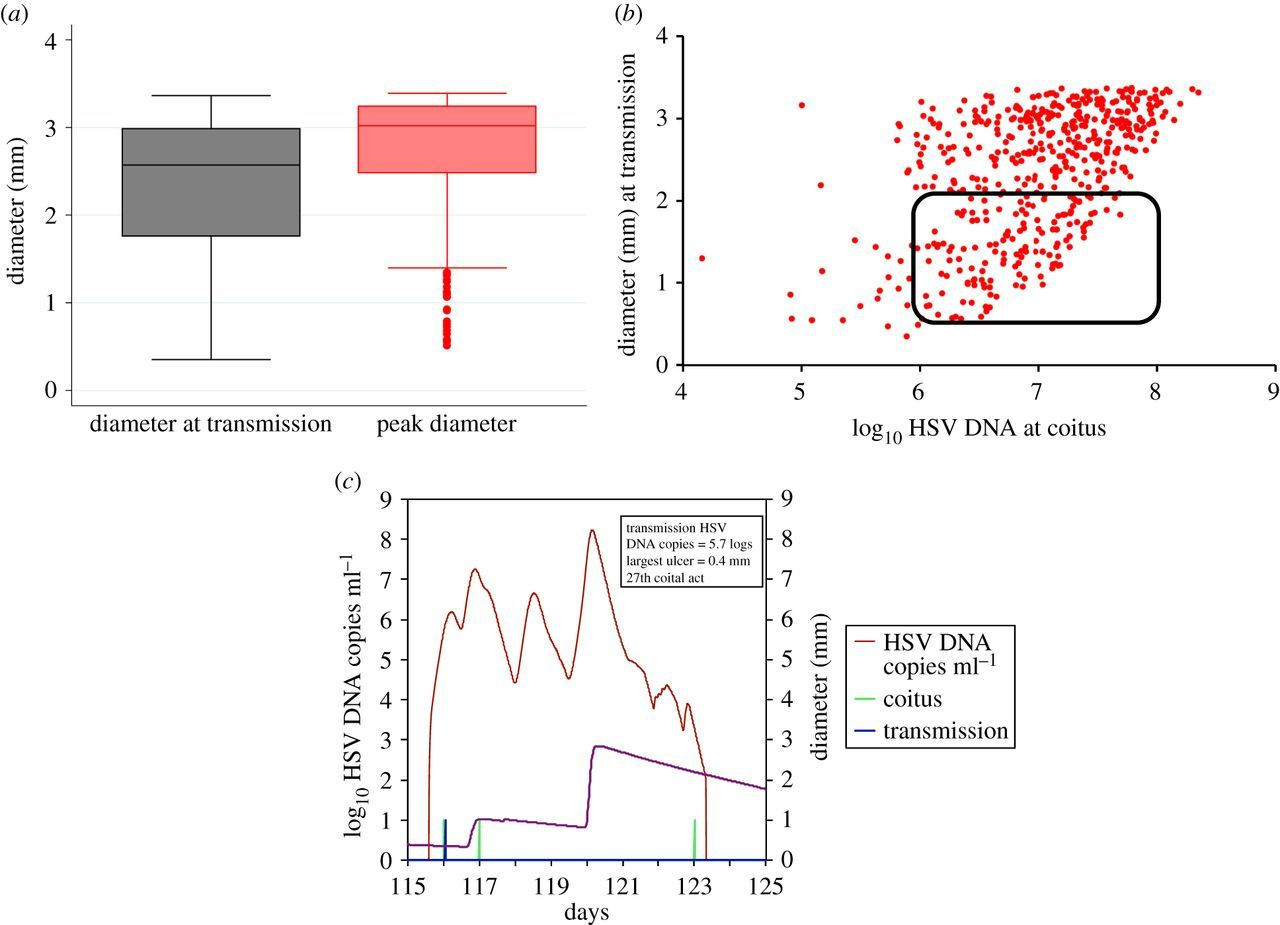 Herpes simplex virus-2 transmission probability estimates based on