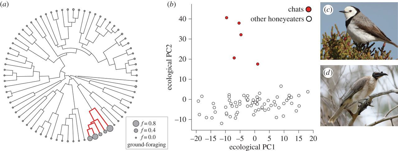 Phylogenetic tests for evolutionary innovation: the
