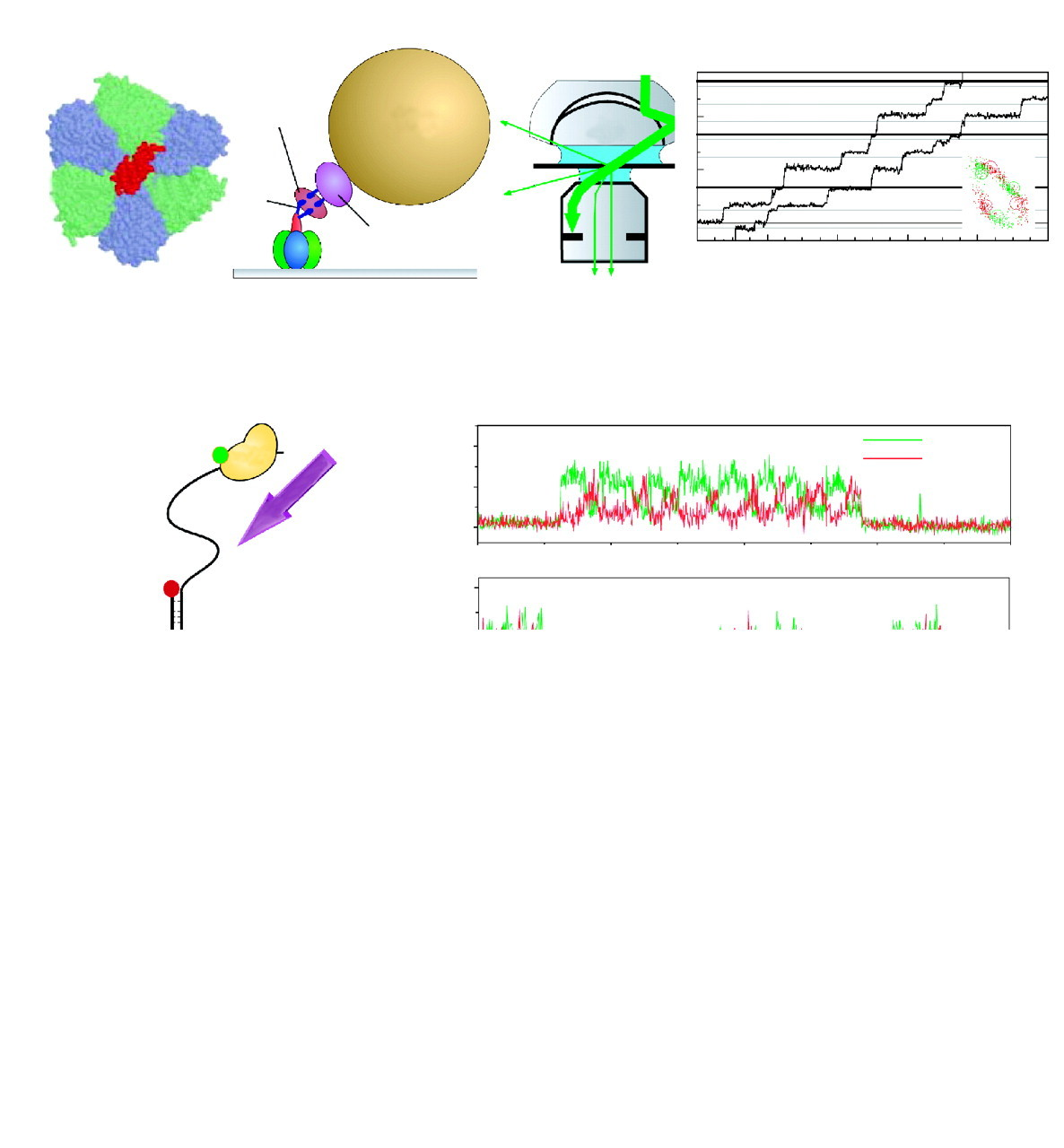 Single Molecule Biophysics At The Interface Of Biology Physics And Powerpoint Slide Traffic Signal Diagram Multicolor 3 Lights Mp Phage