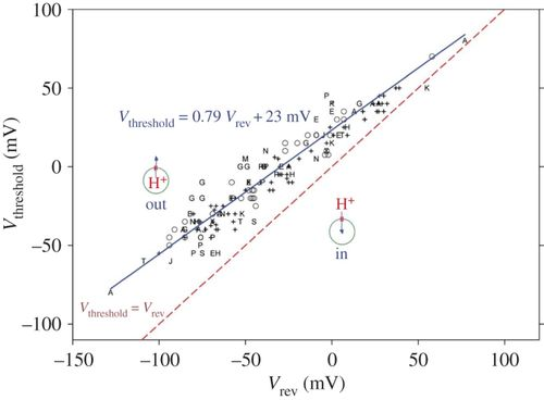 Voltage and pH sensing by the voltage-gated proton channel