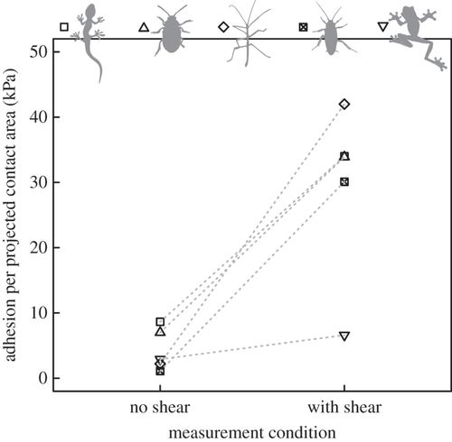 Scaling and biomechanics of surface attachment in climbing