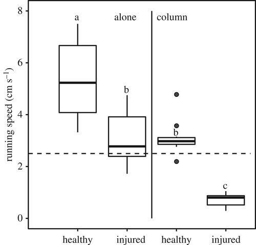 Wound treatment and selective help in a termite-hunting ant