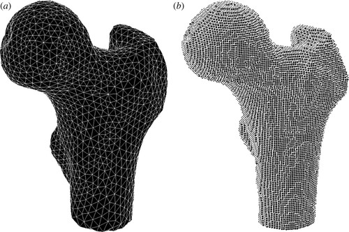 Multi-level patient-specific modelling of the proximal femur