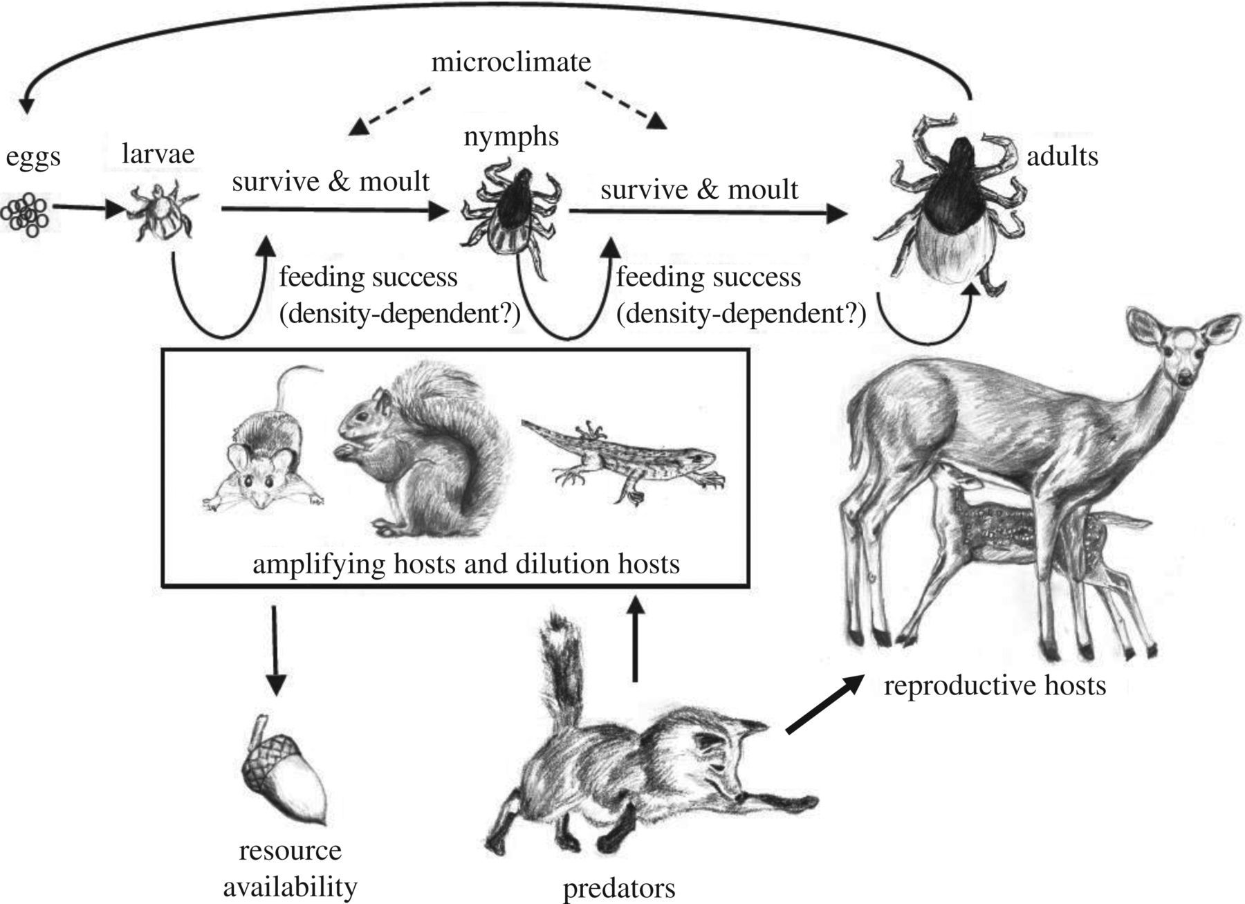 Lyme disease ecology in a changing world: consensus