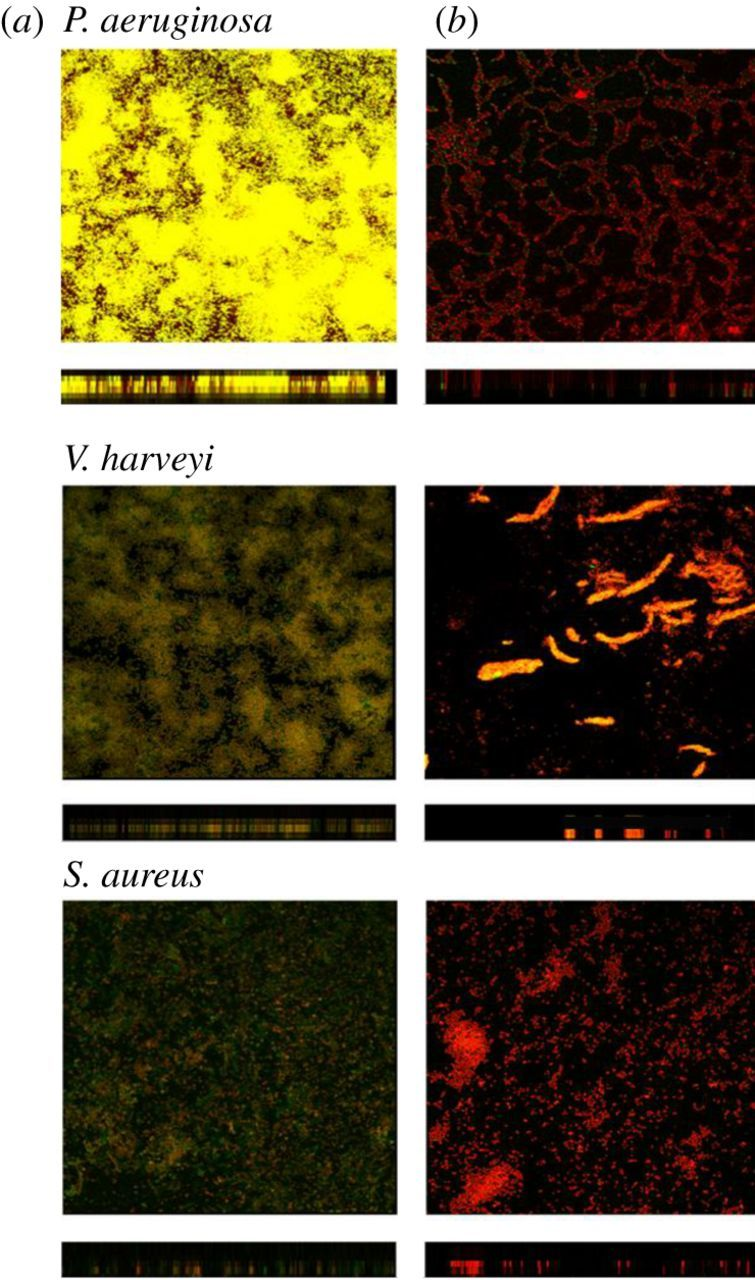 Biofilm inhibition and pathogenicity attenuation in bacteria by