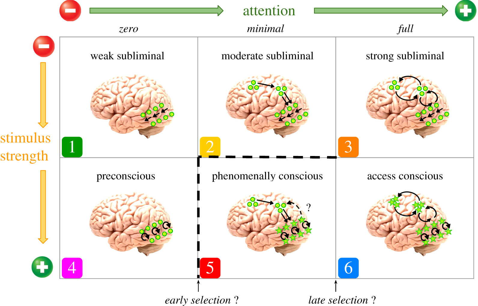 The relationship between attention and consciousness: an