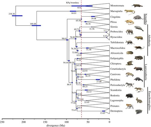 Mammal madness: is the mammal tree of life not yet resolved