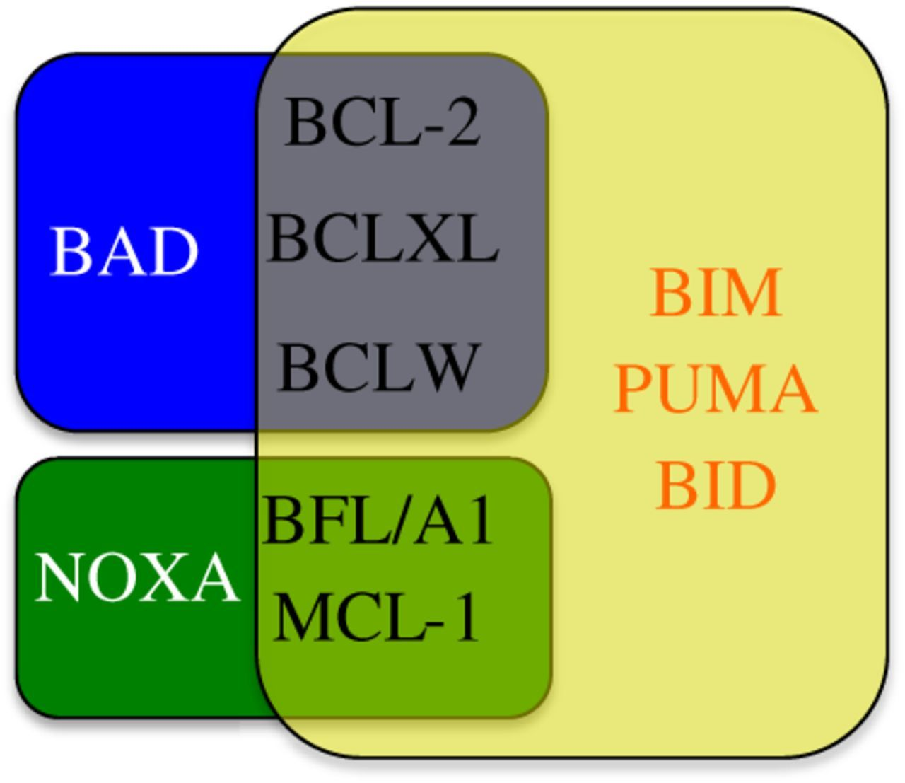 Targeting BCL-2 Regulated Apoptosis In Cancer
