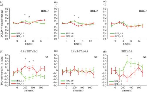 BOLD and its connection to dopamine release in human