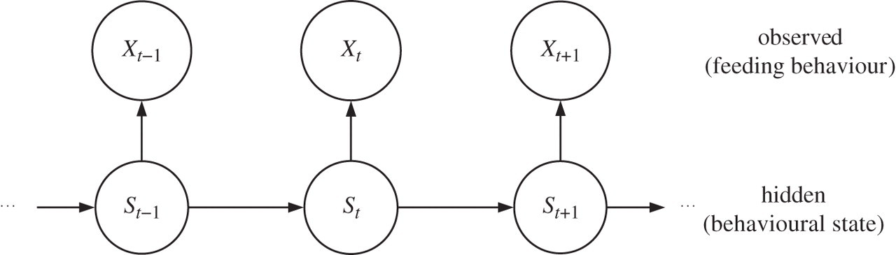 On the application of mixed hidden Markov models to multiple