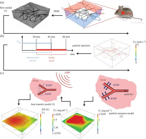 Modelling mass and heat transfer in nano-based cancer