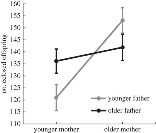 Paternal interactions in a patriarchal society - Homework Sample