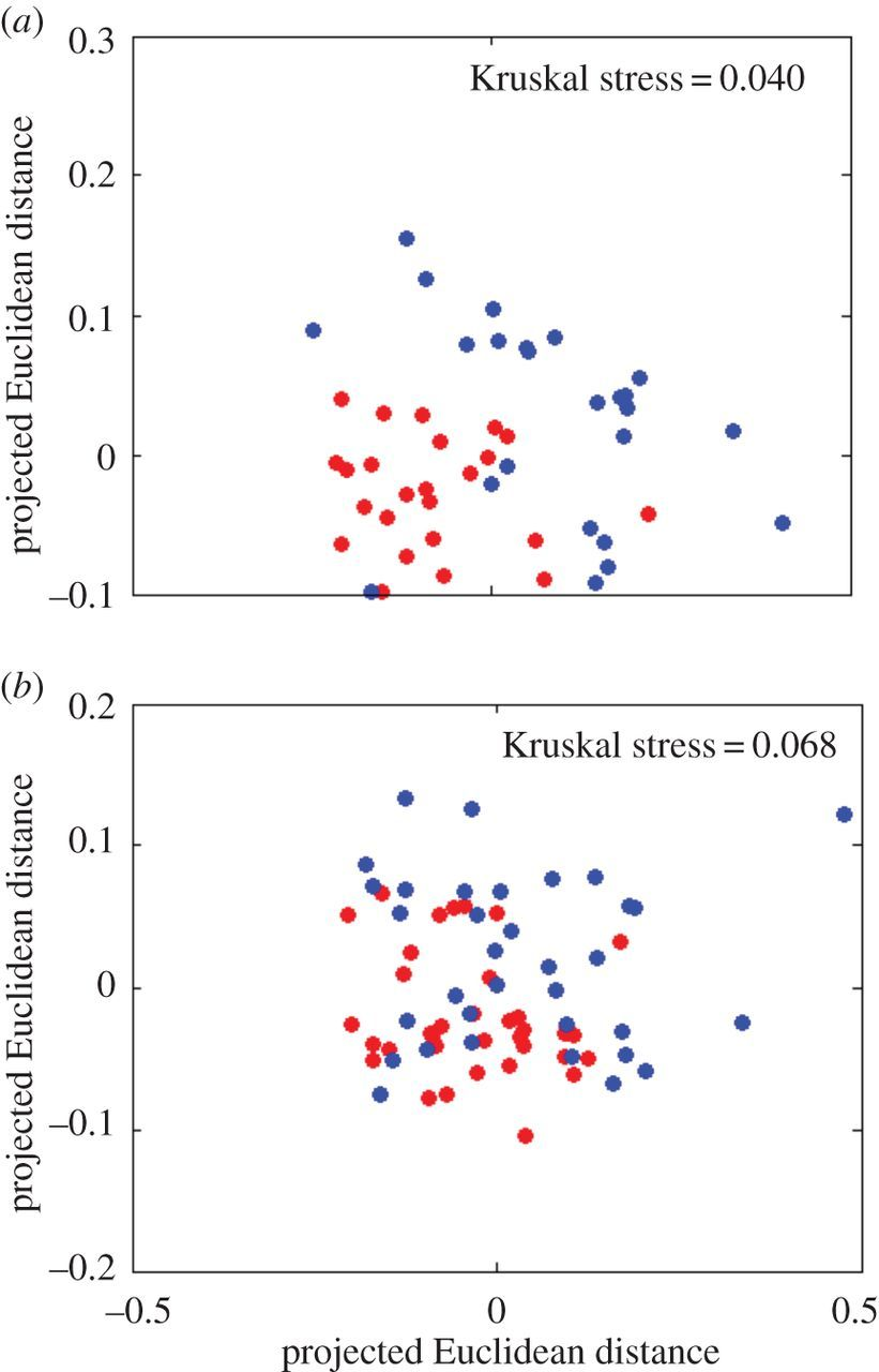 Competition for space during bacterial colonization of a
