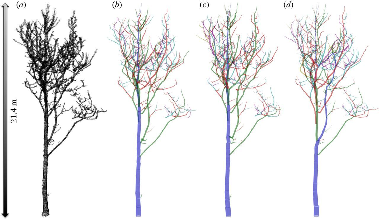 Weighing trees with lasers: advances, challenges and