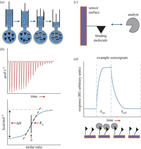 On the binding affinity of macromolecular interactions