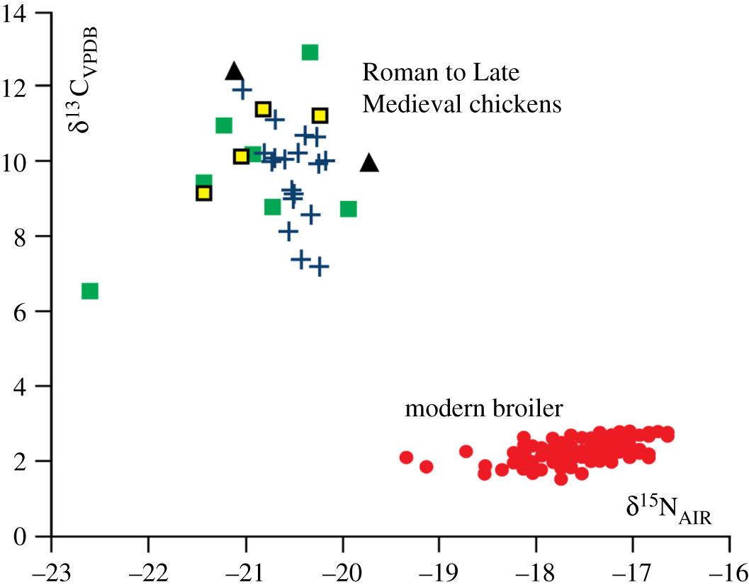 The broiler chicken as a signal of a human reconfigured