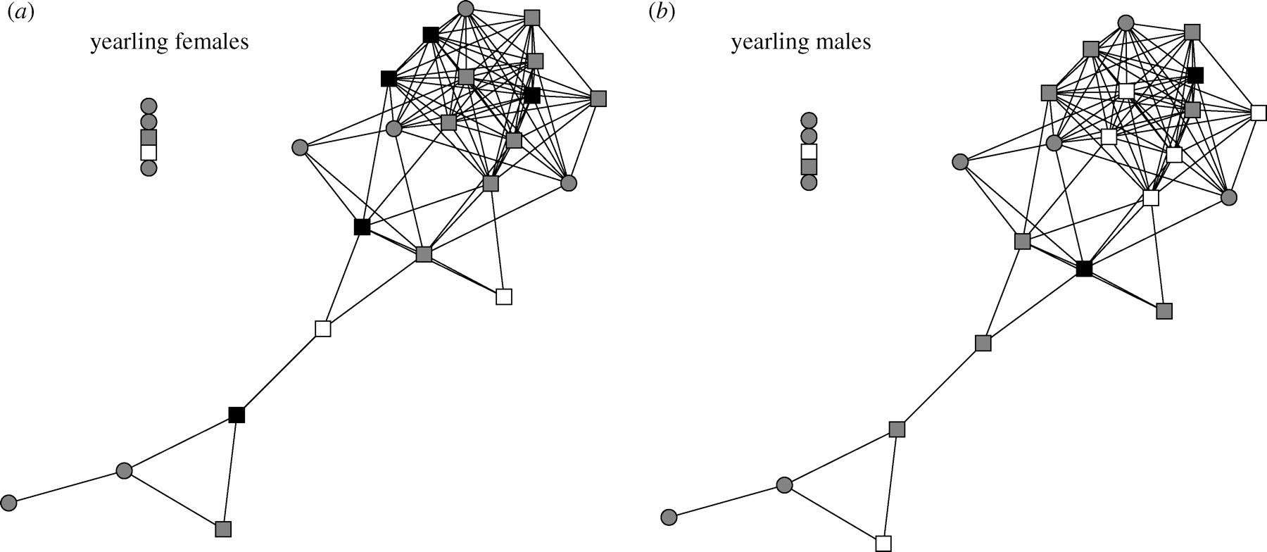 A test of the social cohesion hypothesis: interactive female