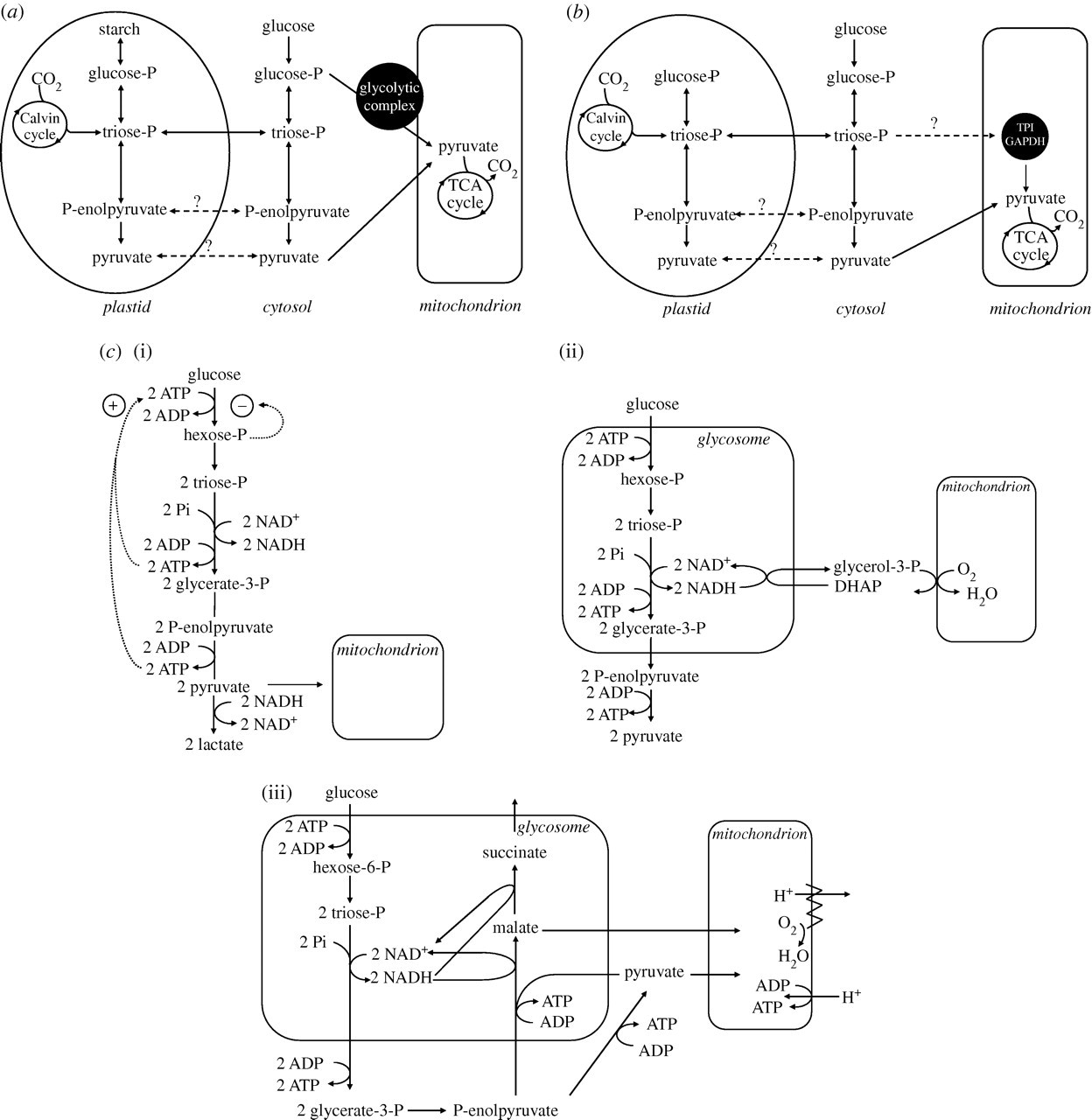 Rewiring and regulation of cross-compartmentalized