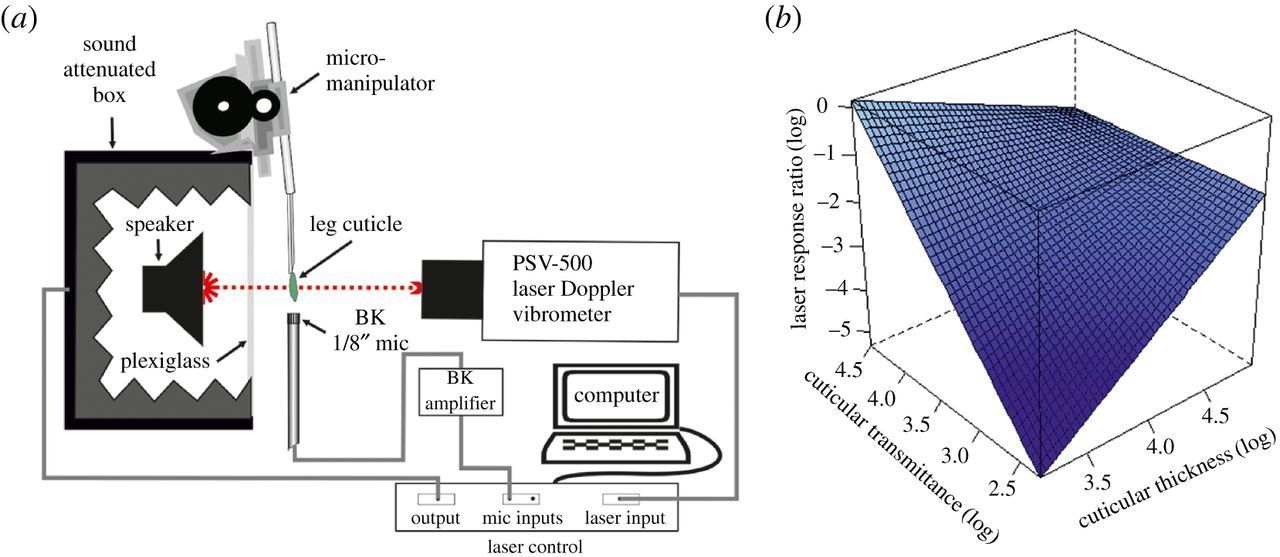 Non-invasive biophysical measurement of travelling waves in
