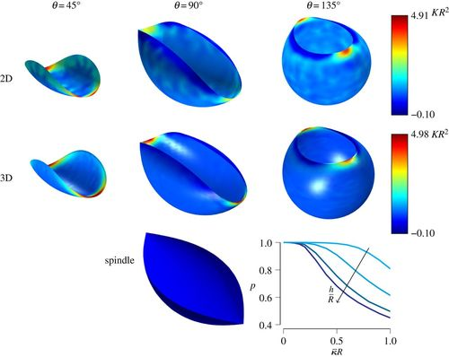 Curvature-driven morphing of non-Euclidean shells   Proceedings of