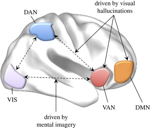 Imagine that: elevated sensory strength of mental imagery in