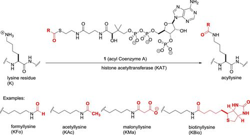Epigenetic drug discovery: a success story for cofactor interference