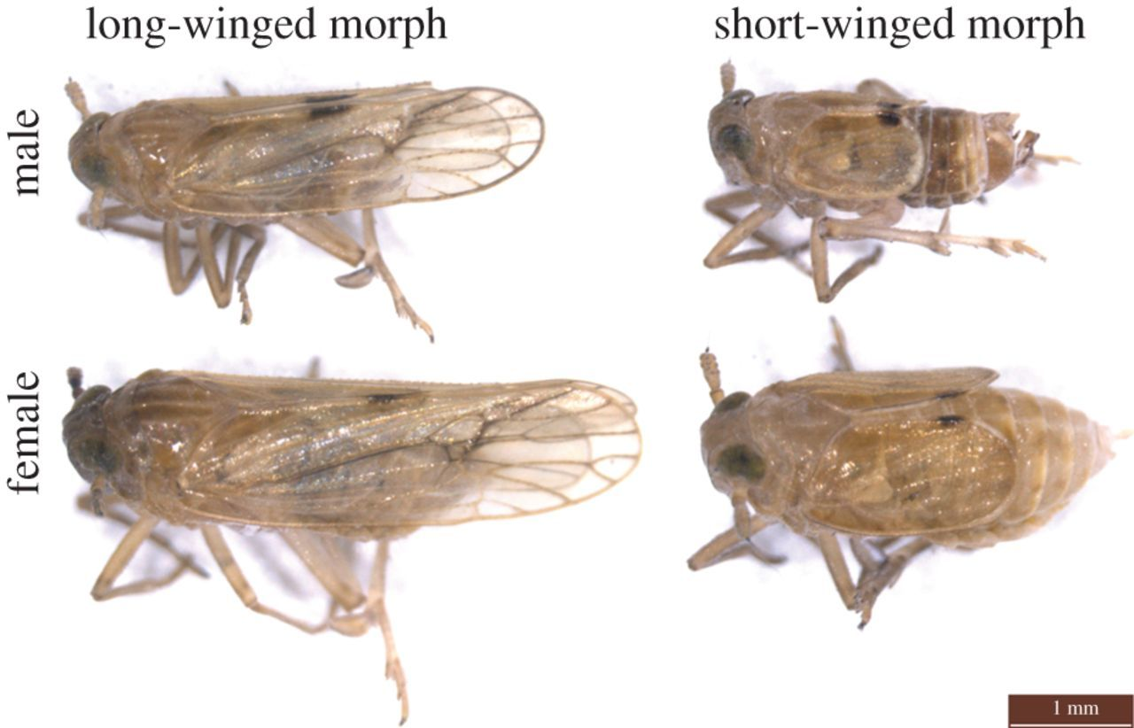 Planthoppers: Their Ecology and Management (Critical Social Thought)