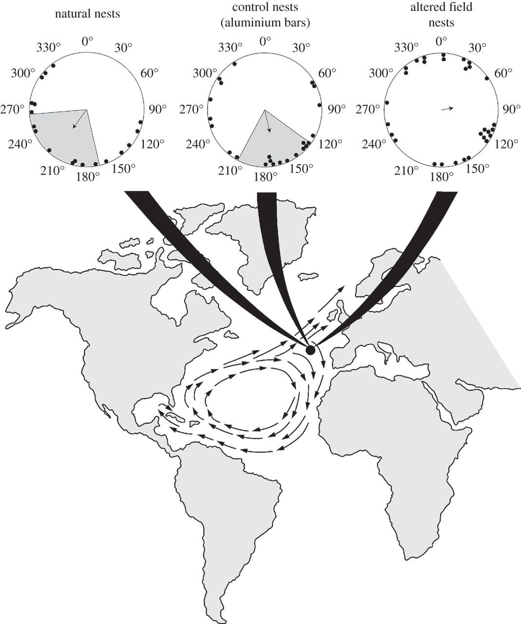 The geomagnetic environment in which sea turtle eggs