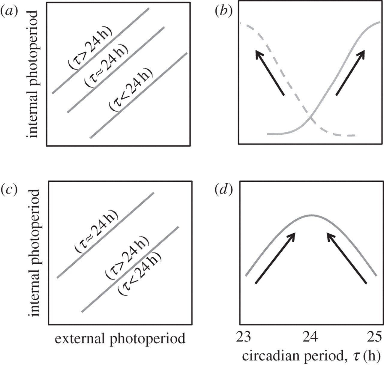 Evolution of time-keeping mechanisms: early emergence and adaptation