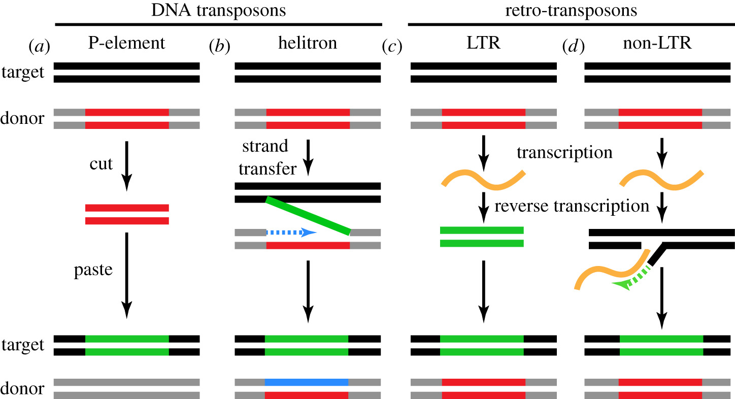 Rapid evolution and conserved function of the piRNA pathway | Open